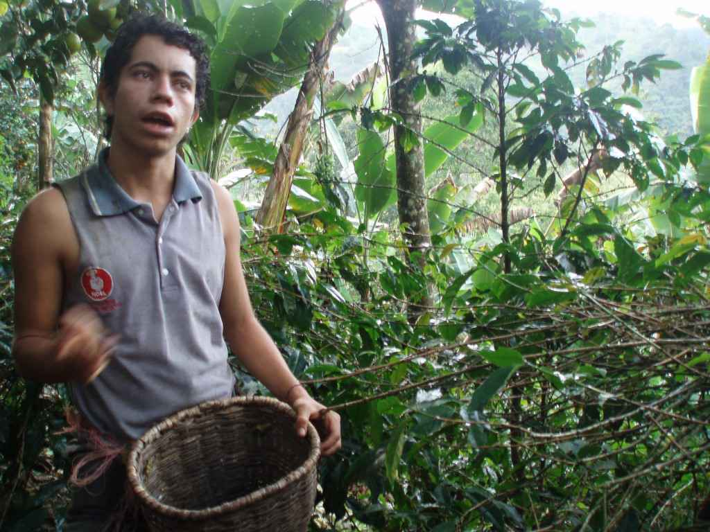 coffee farm worker