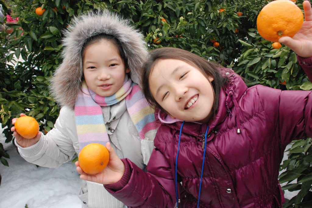 tangerine farm jeju children