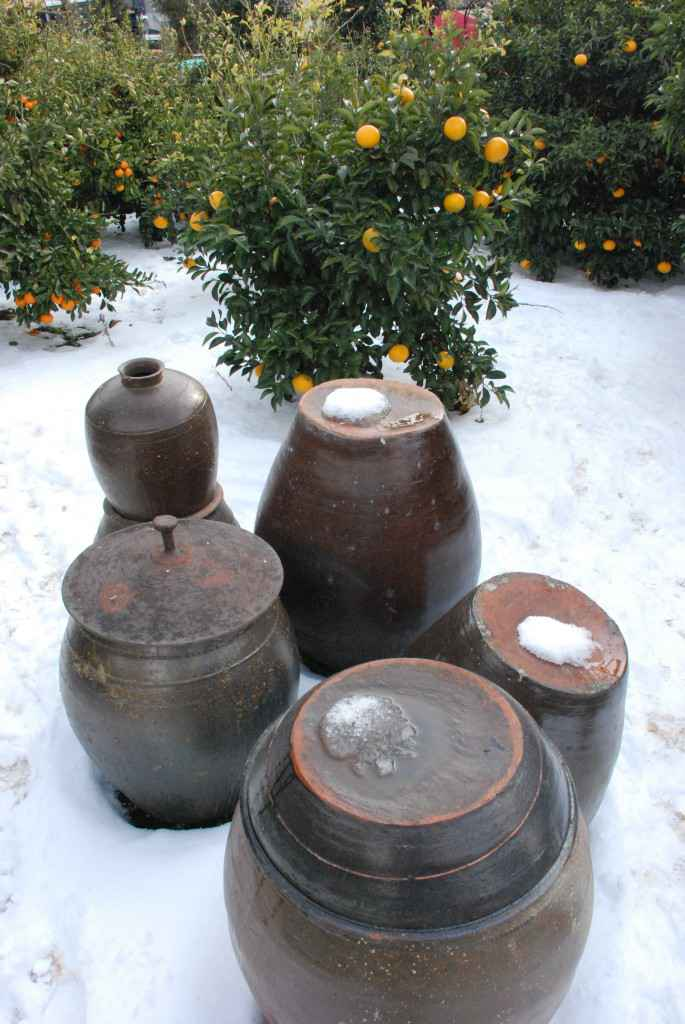 tangerine farm jeju pottery