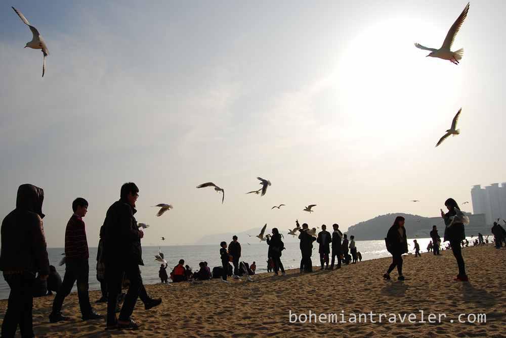 Haeundae Beach Busan (10)