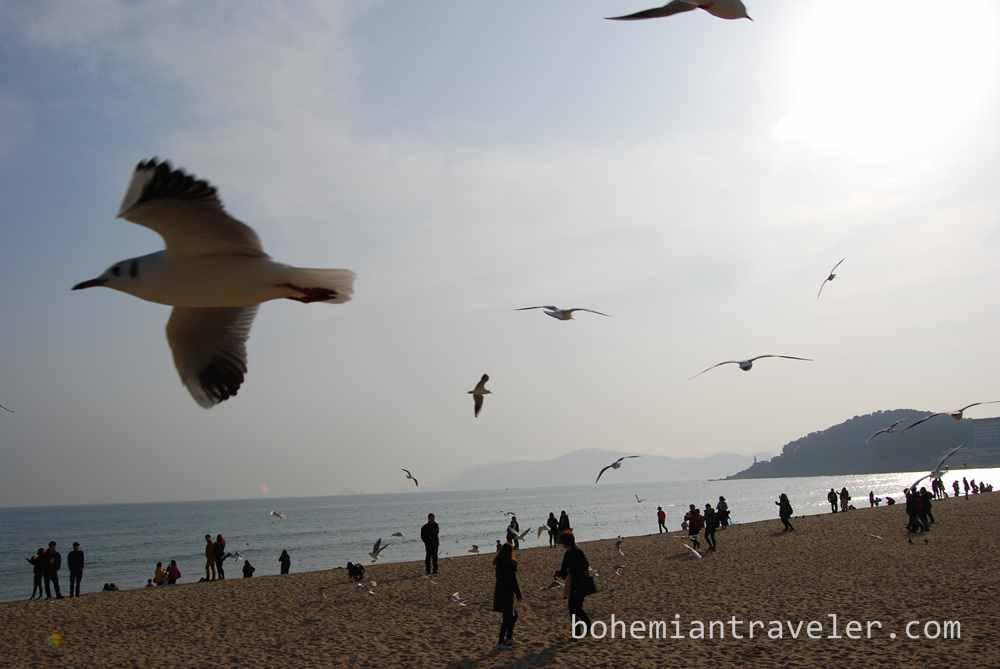 Haeundae Beach Busan (3)