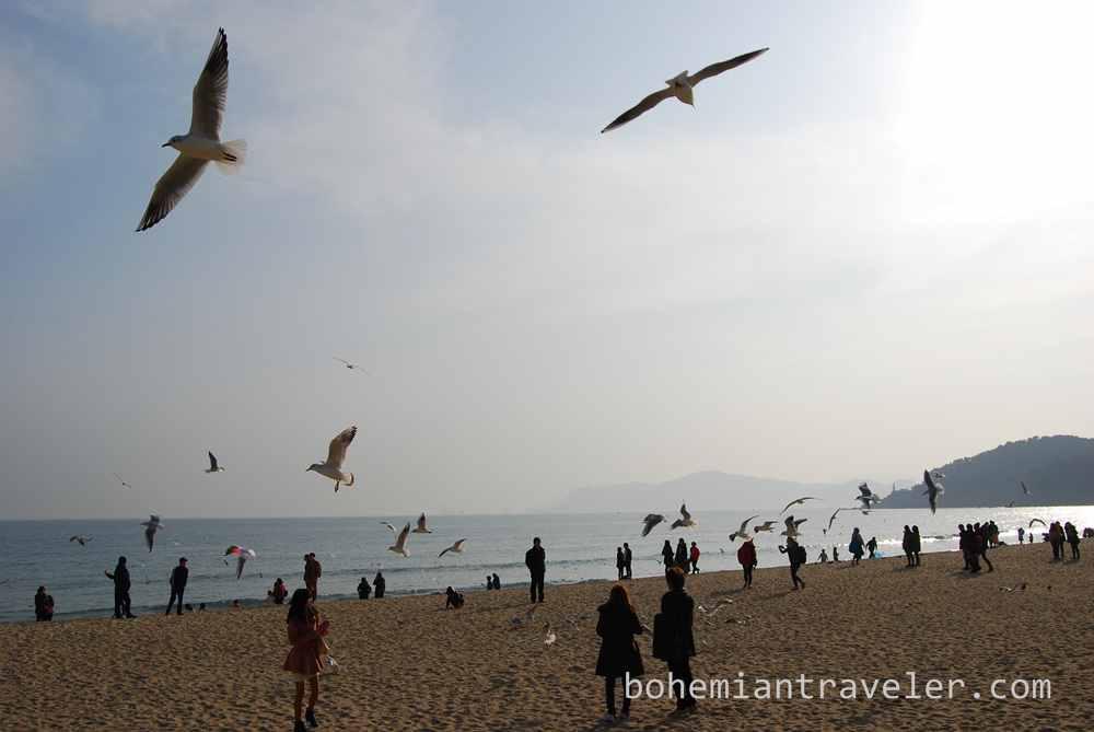 Haeundae Beach Busan (4)