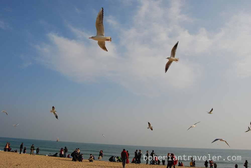Haeundae Beach Busan (5)
