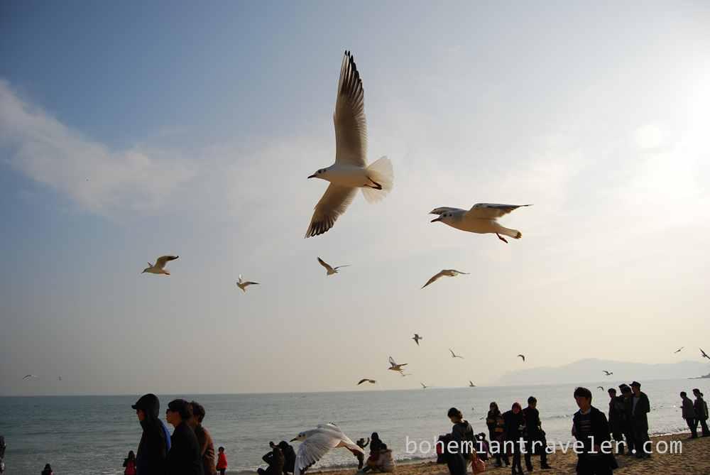Haeundae Beach Busan (9)