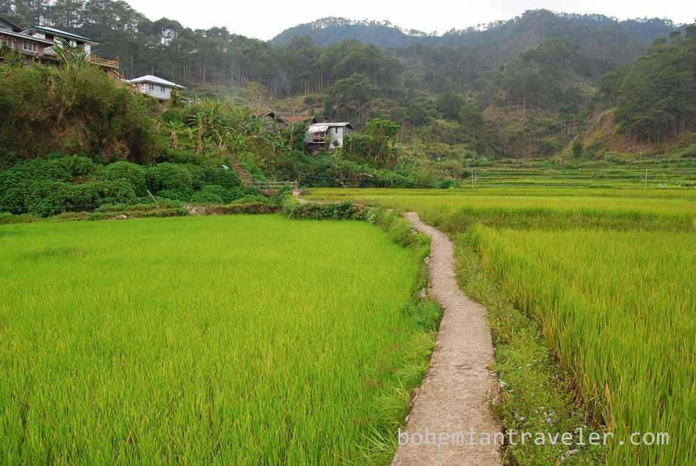 rice paddies Sagada (3)