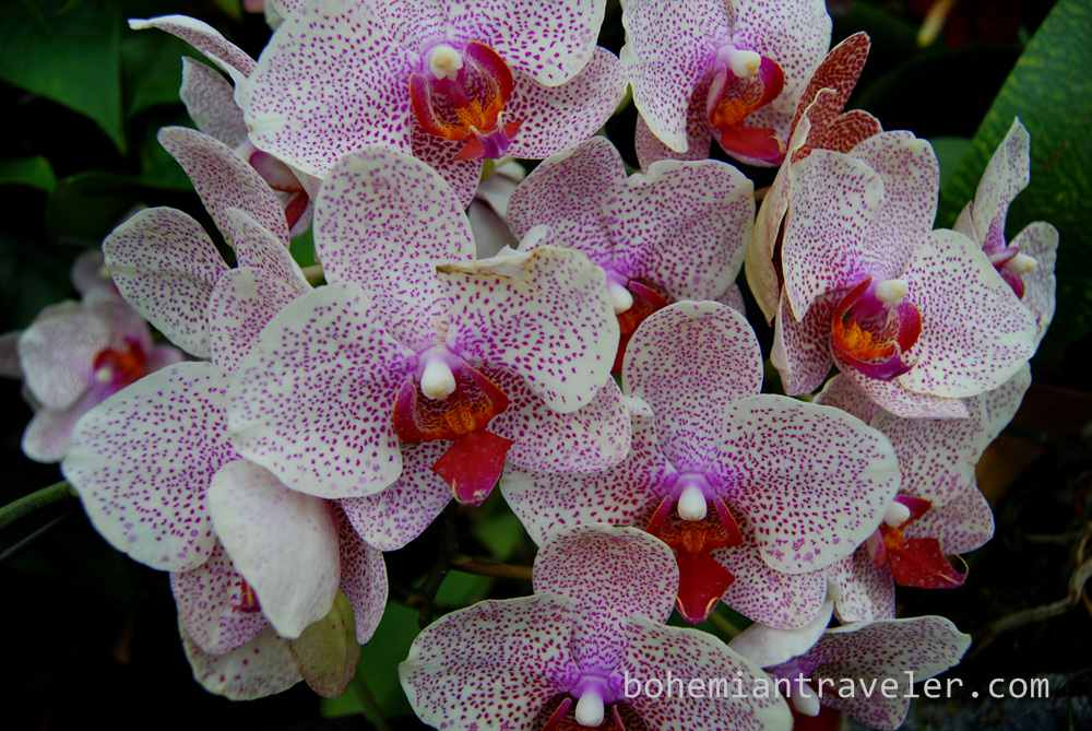 orchids inside the Cloud Forest