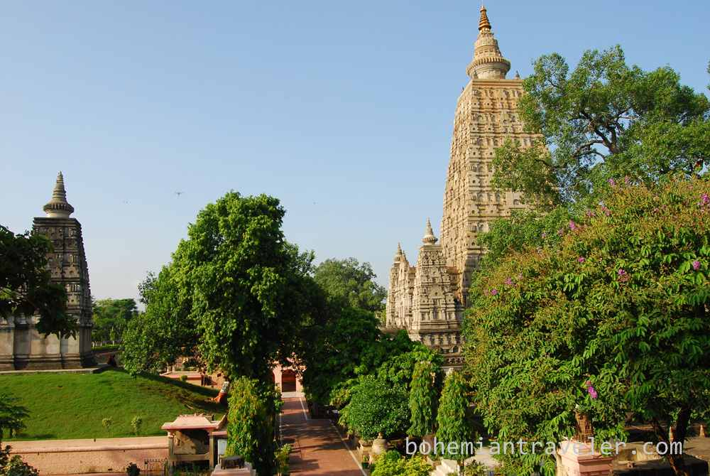Bodhi Tree in Bodh Gaya