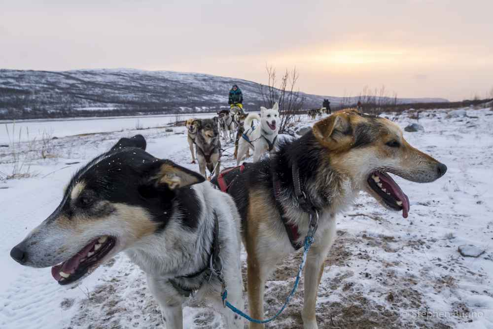 dog mushing norway
