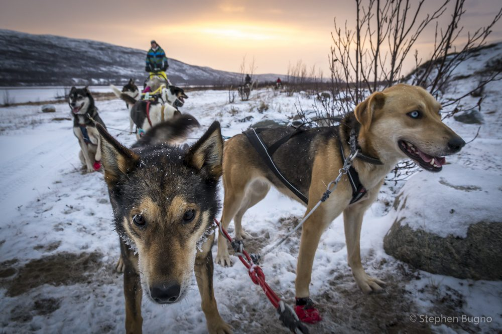 northern lapland in winter Dog Mushing in Norway