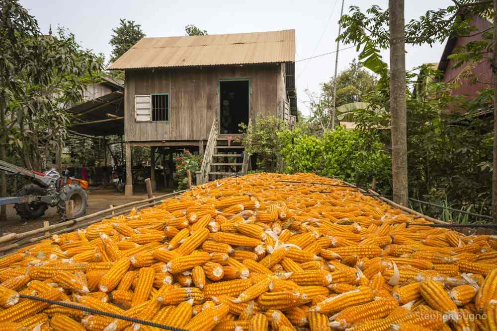 Kampong Cham-1350